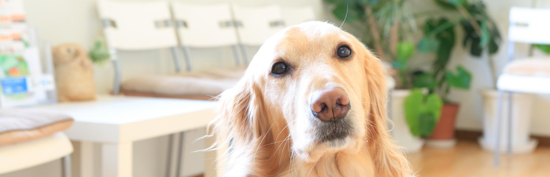 症状を正確に把握するため、一番近くで暮らしている飼い主さんの意見が大切です。